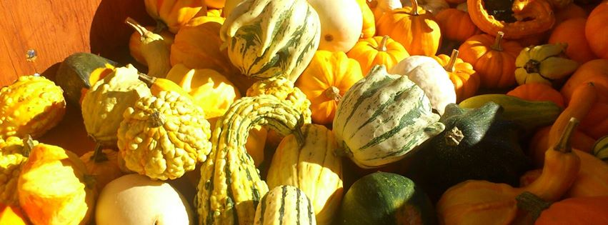 slider-gourds
